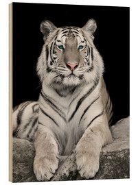 Wood print  Handsome tiger with color accents
