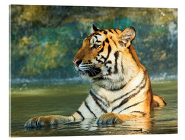 Acrylic print  Tiger lying in the water