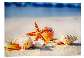 Acrylic print  Starfish and sea shells