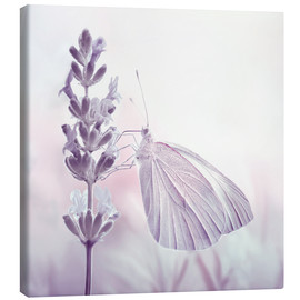 Canvas print  Butterfly - Atteloi