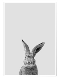 Premium poster Follow the rabbit