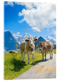 Acrylic print  Cows on the Mountain Pasture