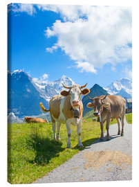 Canvas print  Cows on the Mountain Pasture