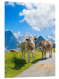 Foam board print  Cows on the Mountain Pasture