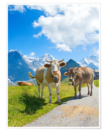 Premium poster  Cows on the Mountain Pasture