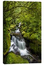 Canvas print  Forest stream with waterfall - Thomas Klinder