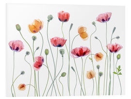 Foam board print  Poppy party - Mandy Disher