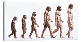 Canvas print  human evolution - Lionel Bret