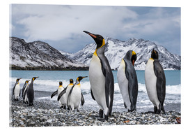 Acrylic print  King penguins on the beach - Deb Garside