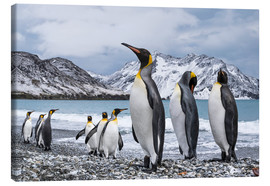 Canvas print  King penguins on the beach - Deb Garside