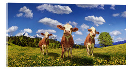 Acrylic print  Cows on the pasture - Michael Rucker