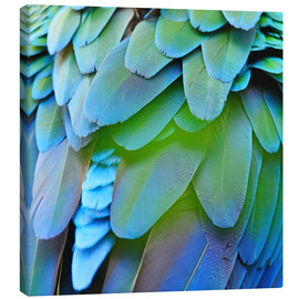Canvas print  iridescent plumage
