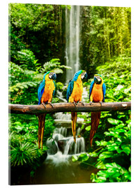 Acrylic print  Three macaws in front of a waterfall