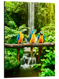 Aluminium print  Three macaws in front of a waterfall