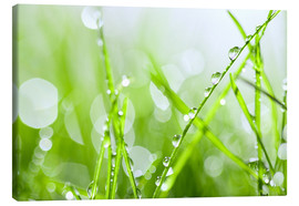 Canvas print  Grass dew