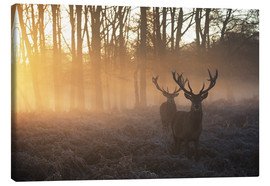 Canvas print  Two deers in Richmond Park, London - Alex Saberi