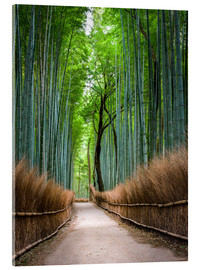 Acrylic print  Bamboo Forest in Kyoto Sagano Arashiyama, Japan - Jan Christopher Becke