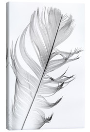 Canvas print  Delicate feather