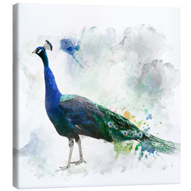 Canvas print  Peacock of the page