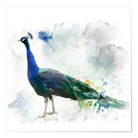 Premium poster  Peacock of the page