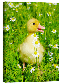 Canvas print  Duckling on flowery meadow