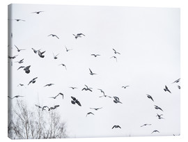 Canvas print  Flock of birds
