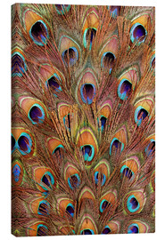 Canvas print  Peacock feathers bronze
