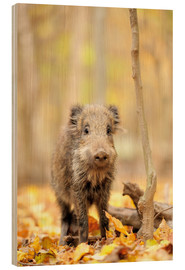 Wood print  Small boar