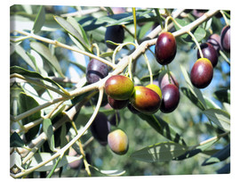 Canvas print  Olive tree in sunlight
