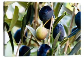 Canvas print  Olives on branch