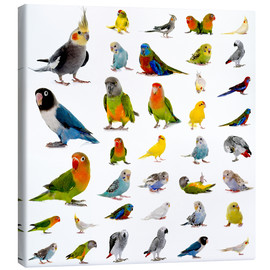 Canvas print  Parrots and parakeets
