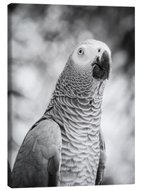 Canvas print  African grey Parrot in gray