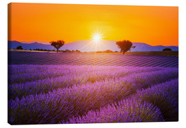Canvas print  Sun over lavender