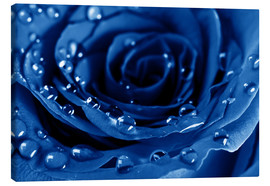 Canvas print  Blue Roses with Water Drops
