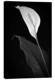 Canvas print  white beauty - Denis Feiner