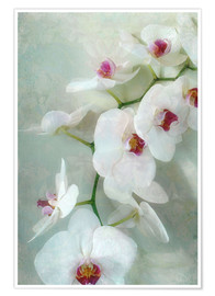 Premium poster  Composition of a white orchid with transparent texture - Alaya Gadeh