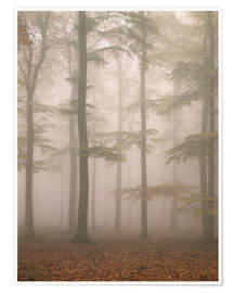 Premium poster Morning mist in the forest