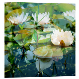 Acrylic print  Montage of white water lilies - Alaya Gadeh