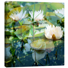 Canvas print  Montage of white water lilies - Alaya Gadeh