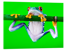 Acrylic print  Colorful Frog on Green Background