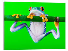 Aluminium print  Colorful Frog on Green Background