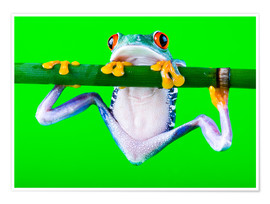 Premium poster  Colorful Frog on Green Background
