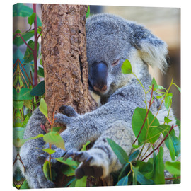 Canvas print  Koala Hugging Tree