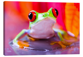 Canvas print  little green frog