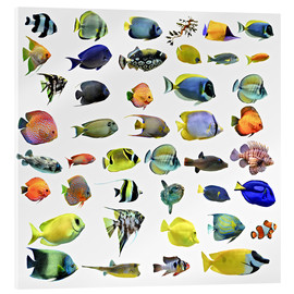 Acrylic print  Fishes of the sea