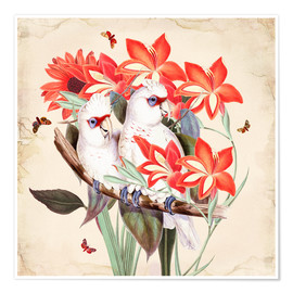 Premium poster  Oh My Parrot XI - Mandy Reinmuth