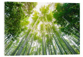 Acrylic print  Light falls through the bamboo forest