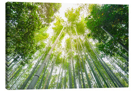 Canvas print  Light falls through the bamboo forest