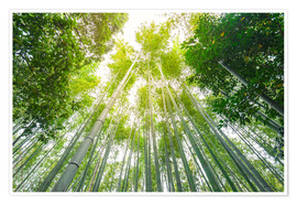 Premium poster  Light falls through the bamboo forest