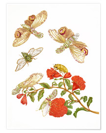 Premium poster  Pomegranate with Lantern Fly and Cicada - Maria Sibylla Merian